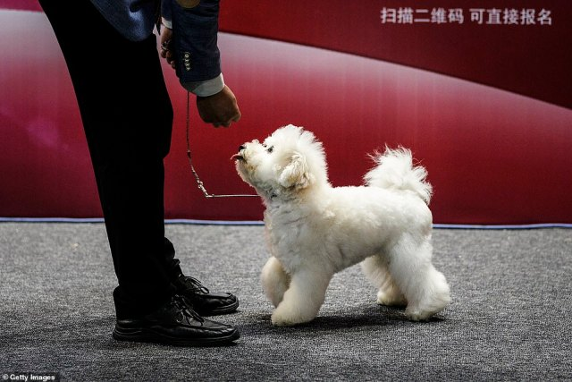 The lockdown was lifted in April, and there have been no new domestically transmitted cases officially reported in Hubei province, where Wuhan is the capital, since mid-May.A man leads a dog during the National General Kennel Club show
