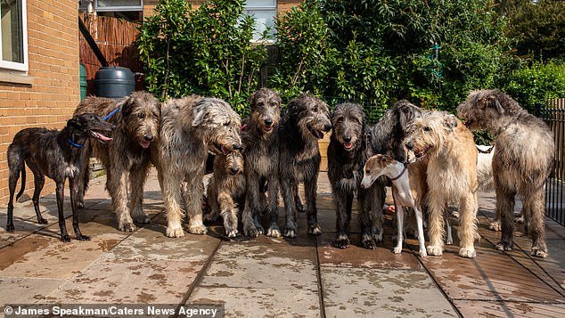 The family's dogs count ten worldhounds, a Whippet (right), a lurcher (left) and a White Swiss Shepherd in total