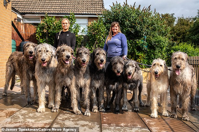 Eve and Claire with their Wolfhounds. The family use a special van to transport their happy pack