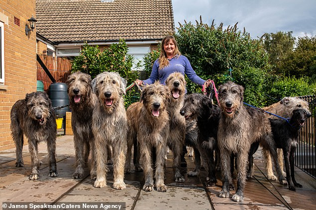 Proud dog mama Claire, pictured with nine of her Wolfhounds. One of the ten was not feeling well and sat the photoshoot out