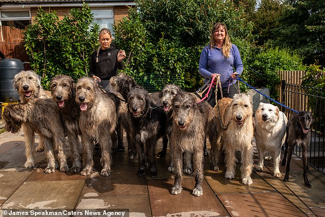 Claire Mather, 44, and husband Jason, 47, who live in Holmfirth, West Yorkshire. spend hundreds of pounds a week on dog food, share their sofa with their beloved hounds and even take their pups to the pub - but they wouldn't have it any other way (pictured Claire, 44 with her daughter Eve, 23, their Lurcher,White Swiss Shepherd and nine of their ten Irish Wolfhounds)