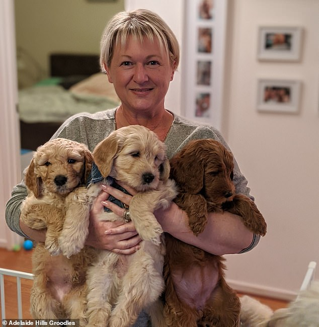 Amanda Wilkinson (pictured), from Adelaide Hills Groodles, has been breeding dogs intermittently for two decades