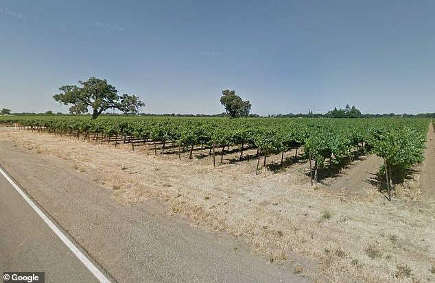 Hung's 30-acre family vineyard in Lodi where he planned to establish his training camp