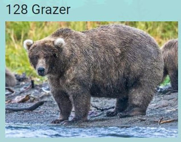 Grazer by name, but not by nature! Given his sizable shape, it seems Grazer has been doing much more than grazing this past summer