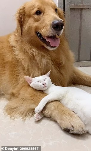 The best furry friends had grown up together