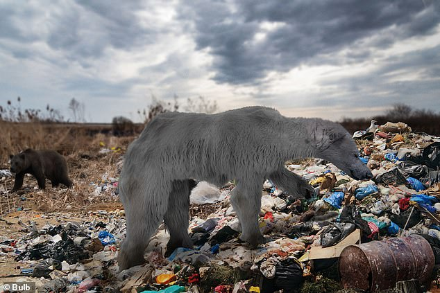 Naturalist Steve Backshall has predicted what the animals of the future might look like if nothing is done to tackle climate change. Pictured, a polar bear scavenges for food