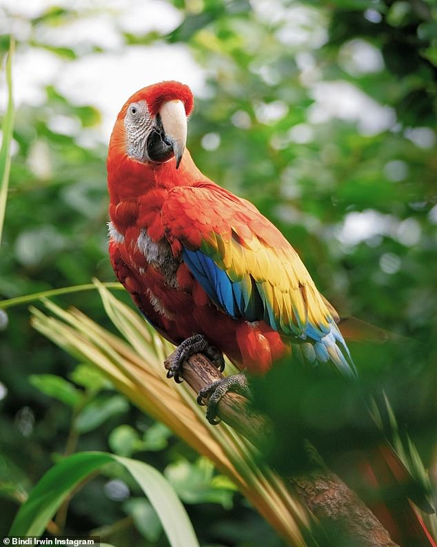 Supporting: Sharing a photo of a rainbow-colored scarlet macaw, she wrote: 'Sending virtual hugs to the LGBTQIA + community on National Day Out Day'