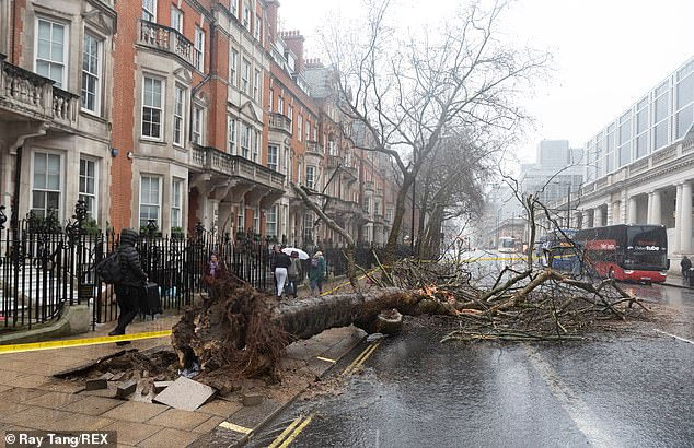 Ten steps to make storm and flood claims: Consumer Fightback