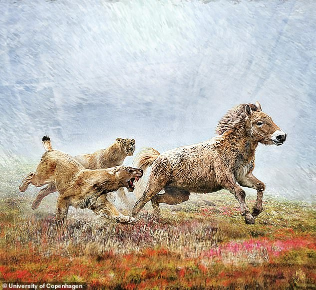 Sabre-toothed cats (pictured, artist's impression) were genetically hardwired for endurance and team work. It allowed the animals to conduct long day time hunts and wear down their prey
