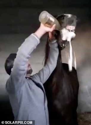 The footage shows the animal being held by its reins as a man empties almost an entire bottle of champagne into its mouth