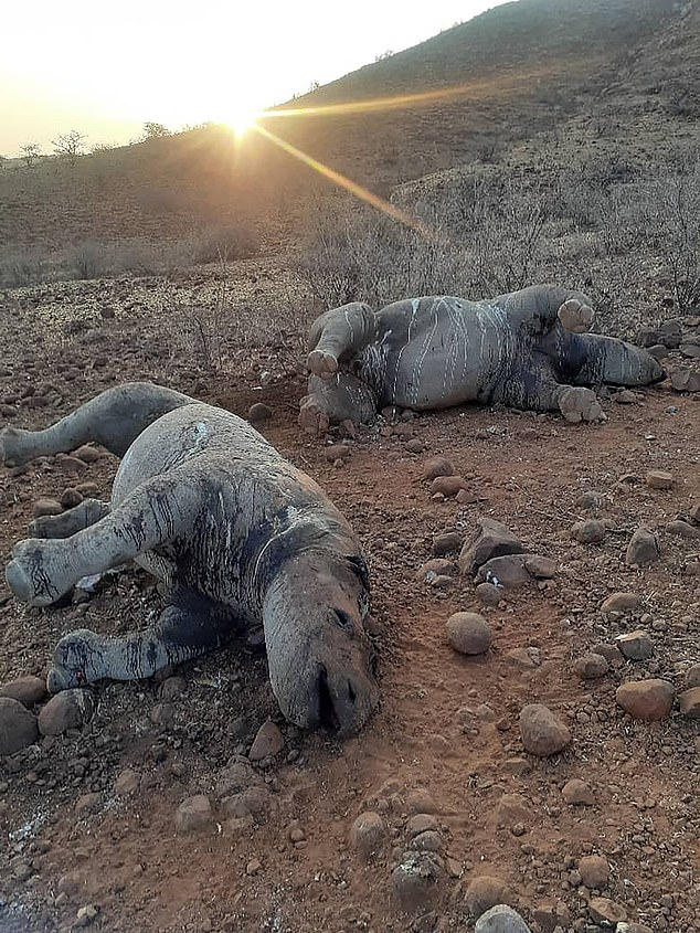 From safaris to slaughter: Butchered for valuable horns, rhinos are among the tragic victims in a new poaching epidemic – as Africa's deserted game reserves lose the tourist millions that protected its wildlife wonders