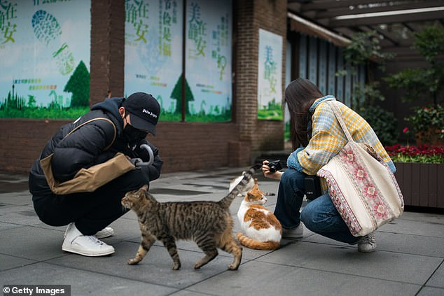 China's state TV has urged authorities to give small animals legal protection in a commentary on social media. Pictured, a couple play with stray cats in a park on March 9 in Shanghai