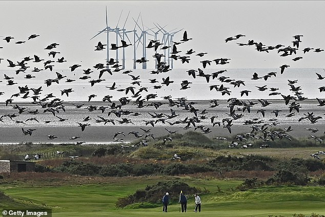 'It's extremely expensive, kills all the birds, is very intermittent, it's got a lot of problems,' Trump said of wind energy and windmills