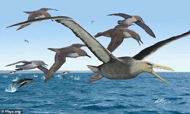 The pelagornithid (center) soared over Earth's oceans more than 40 million years ago. With wingspans of over 20 feet, they may be the largest flying bird ever