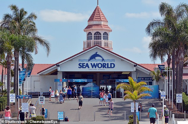 Traditionally, the Gold Coast theme parks employ around 500 seasonal workers during the busy summer season. Pictured: Sea World