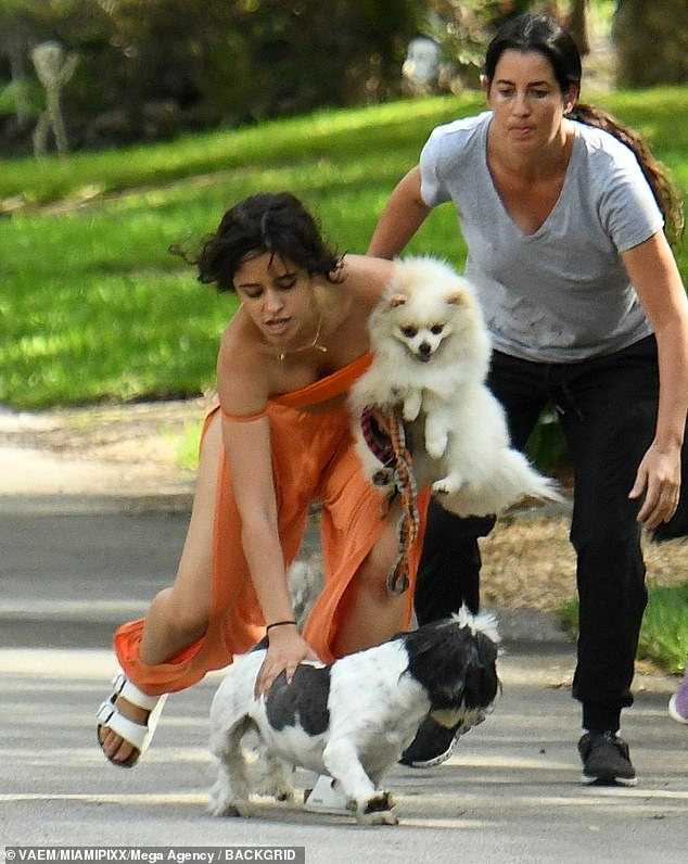 Whoops! One of their pups went off leash during the stroll around their Miami neighborhood