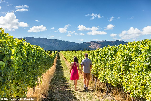 New Zealand will be in no hurry to open the country to international tourists. Pictured: a vineyard in New Zealand