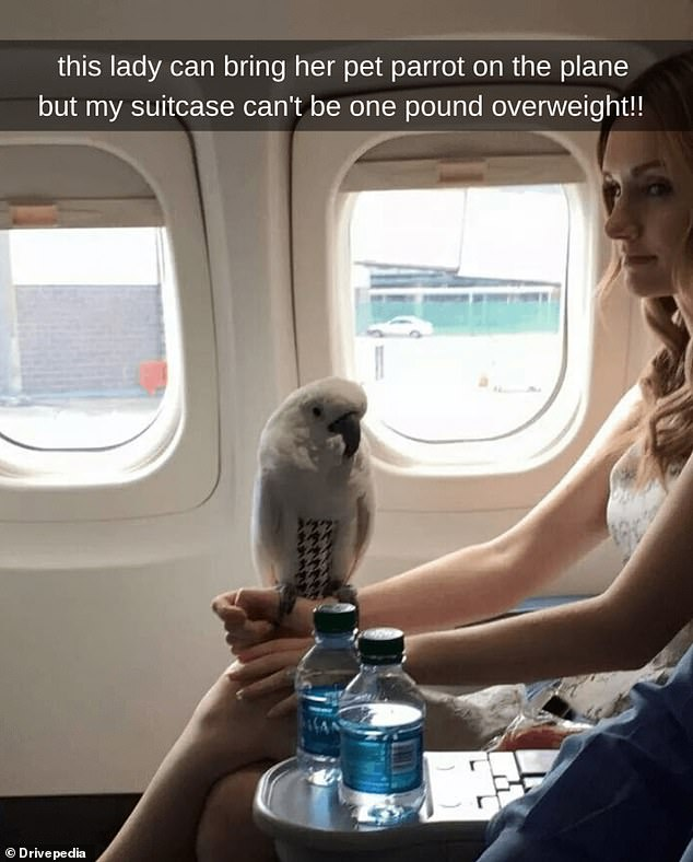 A different kind of flying! This woman brought along her pet parrot on the plane without a cage - while other customers were struggling to fit the correct weight into their suitcases