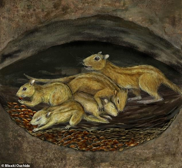 Cuddling may date back further than we thought, as scientists have unearthed the remains of a 75.5 million-year-old burrow containing the fossils of snuggling rodents. Pictured, an artist's impression of a social group ofFilikomys primaevus nesting in their shared burrow