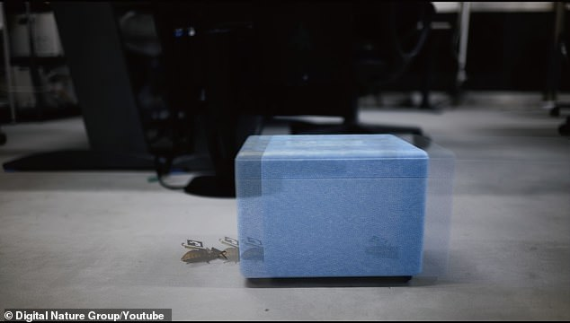 Once it became a cyborg, the team tested the ability to control it across walls, carpets and floors with cables, allowing it to move objects like a small box