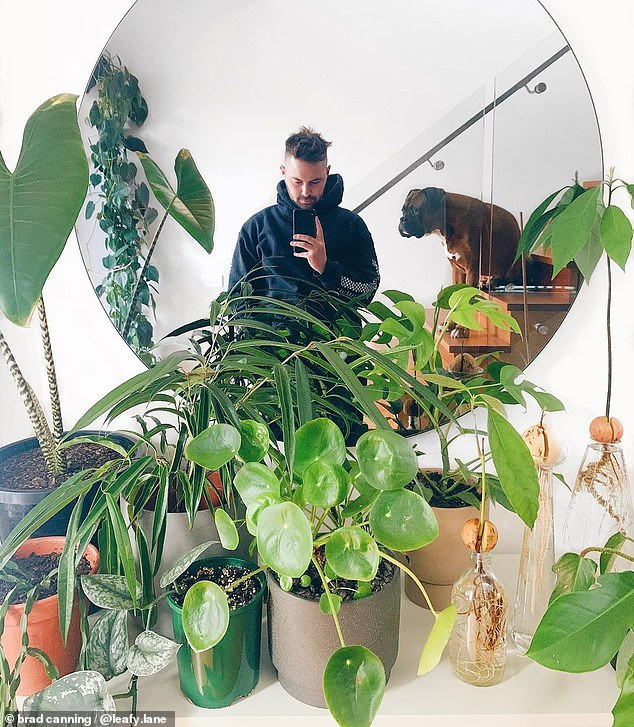 The young man has a legion of fans following his Instagram handle Leafy Lane where he offers his plant-styling advice and basic greenery care