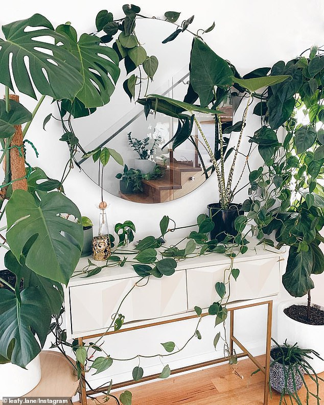 The 29-year-old has plants ranging from an Instagram-worthy foliage wall to the rarer species like the variegated monstera