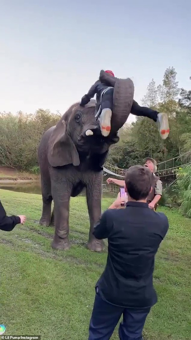 Risky: PETA called Lil Pump's stunt with Bubble the elephant 'exceptionally dangerous'