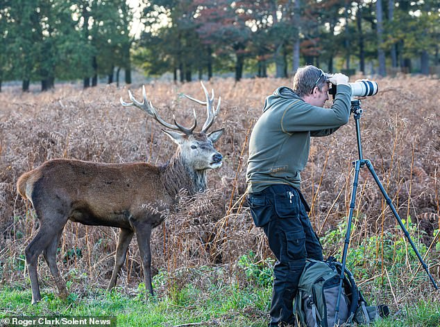 Psst.......I'm right behind you! This unfortunate amateur snapper had his long lens camera pointing entirely in the wrong direction in Bushy Park, west London