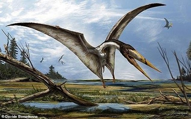 'Pterosaurs with these types of beaks are better known at the time period from North Africa, so it would be reasonable to assume a likeness to the North African Alanqa (pictured),' said paper author andpalaeobiologist Dave Martillof the University of Portsmouth