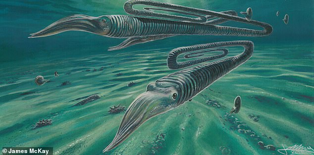 An ancient squid that swam in waters near Antarctica boasted a paperclip-shaped shell and is believed to have had a 200-year life span, study reveals