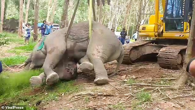 :ocal police are still hunting the people who shot the elephant last month