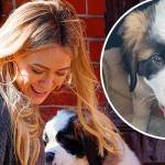 A Smiling Hilary Duff Brings Home A New St Bernard Puppy As She Unloads The Dog Onto Her Ny Stoop Daily Mail Online