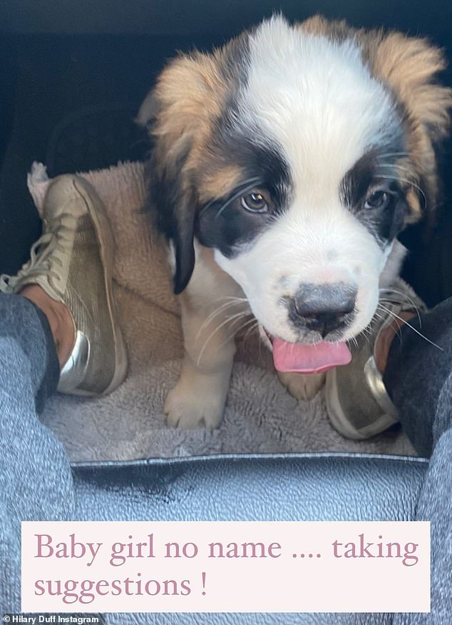 Puppy love: She took to her Instagram Story with an adorable photo of the St Bernard pup at her feet, asking her 15.9million followers for assistance: 'Baby girl no name …. taking suggestions!'
