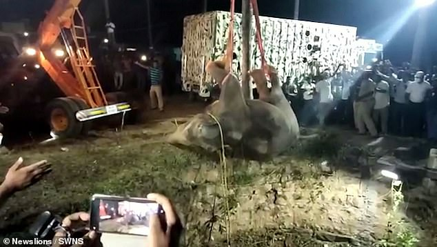 Footage shows the elephant being pulled out of the well to the cheers of large crowds who had gathered around