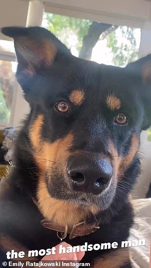 Loyal companion: She shared a close up of her dog who she shares with husband Sebastian