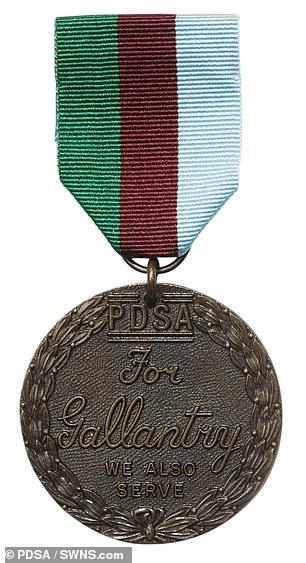 Kuno has been awarded the PDSA Dickin Medal for his devotion to duty - equal to the Victoria Cross, the highest award in the British honours system