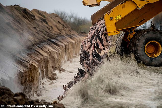 Police said sandy soil used to bury the mink has proved too light to keep the bodies down as they swell, and that more is being added to the affected pits