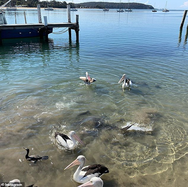 The restaurant is in Batemans Bay which is four hours south of Sydney, but just one hour east of the nation's capital