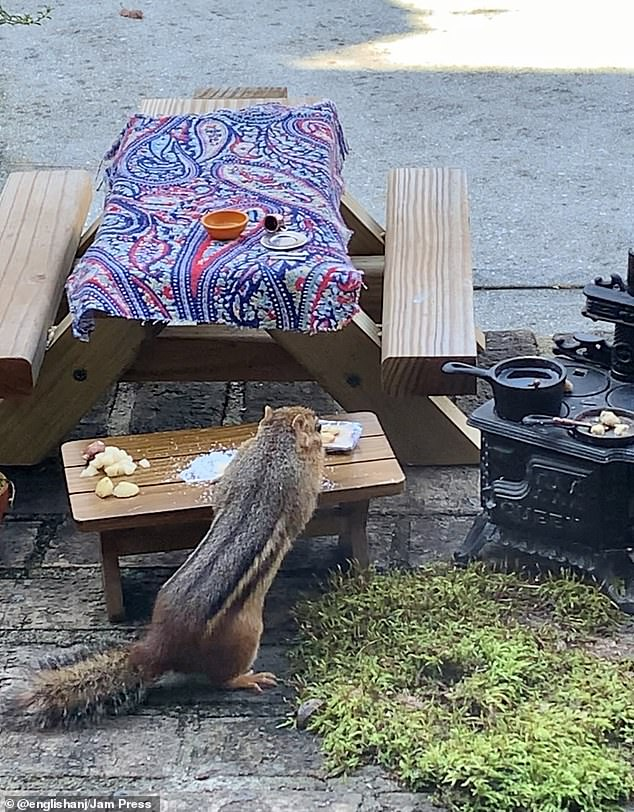 How fun for him: Angela has a little stove and skillets for the chipmunk to enjoy