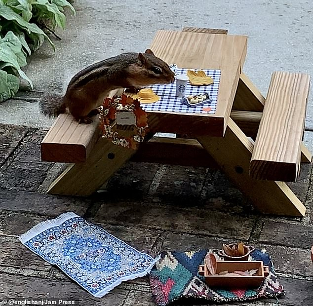 New friend: The writer put the table on her porch for the chipmunk that would come by, and the project grew from there