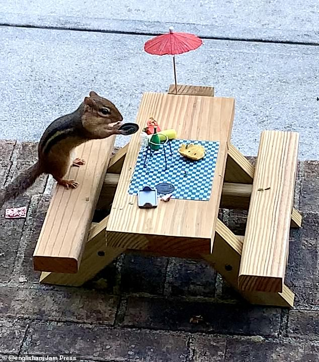 Safety first: Angela researched what chipmunks like to eat, what is harmful to them, and what their diet consists of so she'd know what to feed him