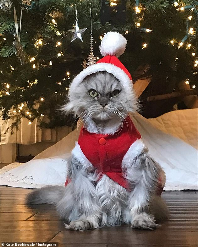 Grumpy cat: A year ago, she had posted a photo of Clive dressed as Santa sitting in front of a decorated Christmas tree. The gray Persian pussy was clearly not amused, prompting Beckinsale to write in the Instagram caption: 'Bad Santa ❤️❤️❤️❤️'
