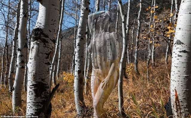 'Overall, the experience felt fun and free and was a healing experience,' she said (pictured:Aspen Birch Trees, Aspen National Park)