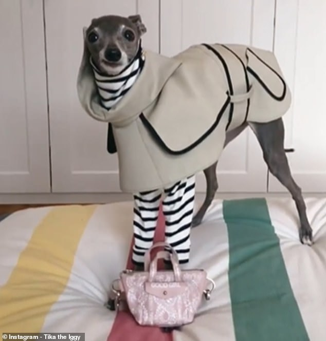 The latest video, which is narrated by Lorena Pages and features Tika appearing to speak with a Spanish accent, show the canine Instagram star in a grey mac and stylish monochrome top
