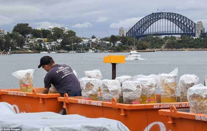 New South Wales has recorded 18 new local cases of coronavirus. Pictured: Fireworks are prepared for New Years Eve in Sydney