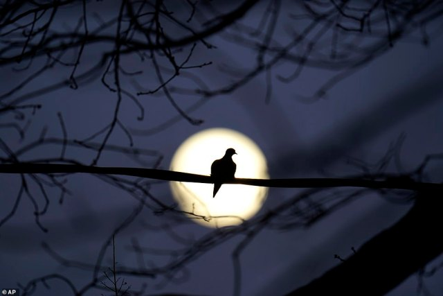 The nickname comes from the Native American tribe the Mohwaks and refers to the dropping temperatures in December that means winter has arrived. Pictured, the full moon hanging over Maryland