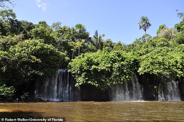 A single season of drought in the Amazon rainforest can reduce the forest's carbon dioxide absorption for years after the rains return. Pictured, a waterfall in the State of Amazonas