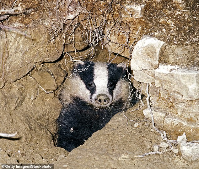 Walsh stuffed most of Mr Snell's remains down a badger den and dumped the other body parts in communal bins and remote woodland in Chesterfield