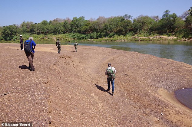 Team fieldwalking along the Gambia River, Senegal. The team don't know exactly why West Africa's Stone Age inhabitants took longer to adopt new tools, but speculate it could be because of geographical isolation