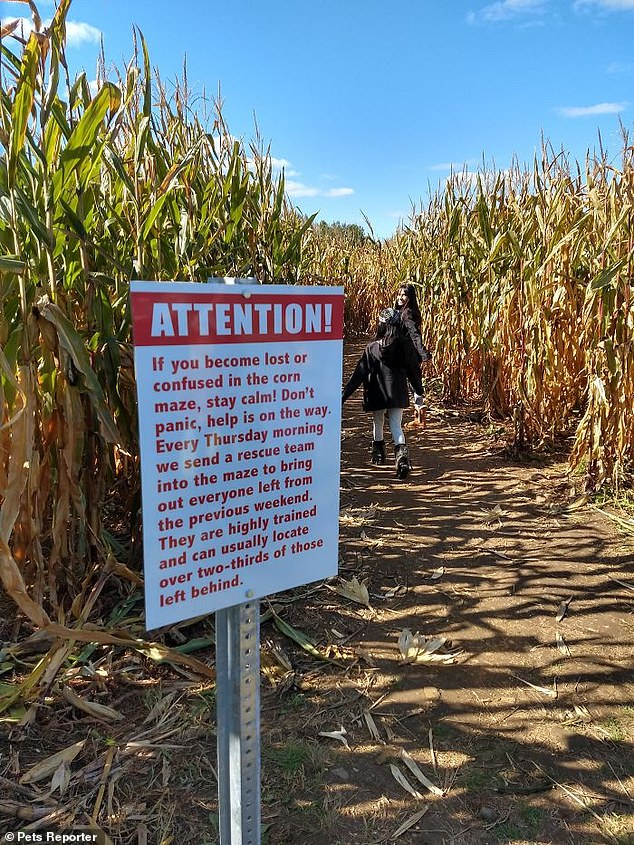 A sign at a corn field attempted to reassure visitors that if they get lost someone will rescue them within a week